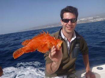 Scorpion or Fire fish Cavalier & Blue Marlin Sport Fishing Gran Canaria