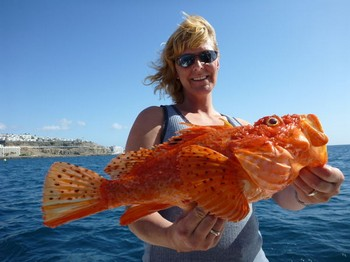 Scorpion fish Madeira Cavalier & Blue Marlin Sport Fishing Gran Canaria