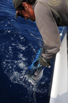 Released !! Cavalier & Blue Marlin Sport Fishing Gran Canaria