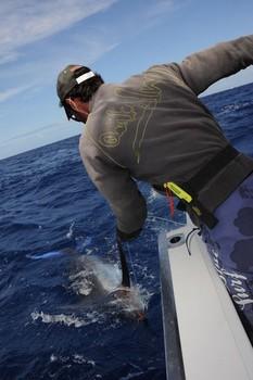 Etiquetar y liberar Pesca Deportiva Cavalier & Blue Marlin Gran Canaria