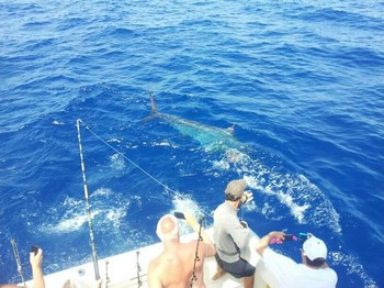 250 kg Blue Marlin Cavalier & Blue Marlin Sport Fishing Gran Canaria