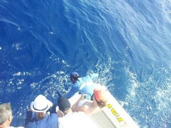 Blue Marlin 220 kg Cavalier & Blue Marlin Sport Fishing Gran Canaria