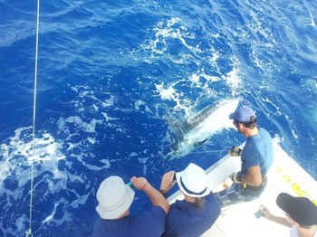 Release Me !!! - 220 kg Blue Marlin tagged and released on the boat Cavalier Cavalier & Blue Marlin Sport Fishing Gran Canaria