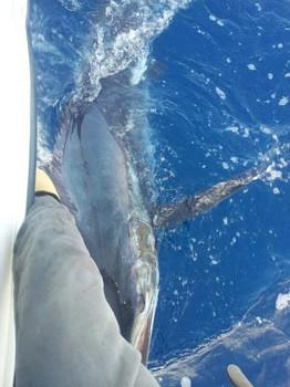 Blue Marlin - Well done - boat Cavalier Cavalier & Blue Marlin Sport Fishing Gran Canaria