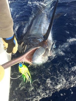 Release Me !!! Cavalier & Blue Marlin Sport Fishing Gran Canaria