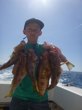 Comber - Nice catch of comber fish on the boat Cavalier Cavalier & Blue Marlin Sport Fishing Gran Canaria