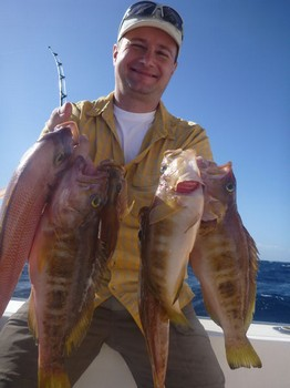 Combers - A nice catch of Combers done by Lawrence Anderson Cavalier & Blue Marlin Sport Fishing Gran Canaria