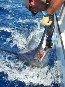 Well done - Please release me ...? Cavalier & Blue Marlin Sport Fishing Gran Canaria