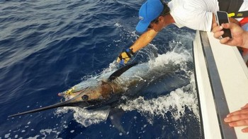 Release Me - Please release me ...! Cavalier & Blue Marlin Sport Fishing Gran Canaria