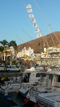 Fiësta ! - Good results for most charter boats Cavalier & Blue Marlin Sport Fishing Gran Canaria