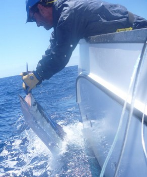 Spearfish Cavalier & Blue Marlin Sport Fishing Gran Canaria