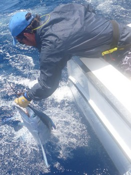 30 kg Spearfish caught & released by Niklas Kaltenbach Cavalier & Blue Marlin Sport Fishing Gran Canaria