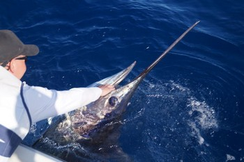 240 kg Blue Marlin caught by Rasmus Pindstrup Cavalier & Blue Marlin Sport Fishing Gran Canaria