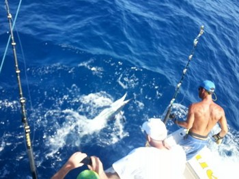White Marlin released by Sander Martind from Holland Cavalier & Blue Marlin Sport Fishing Gran Canaria