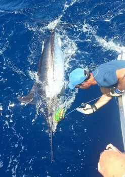 330 lb Blue Marlin released by Mark Smith Cavalier & Blue Marlin Sport Fishing Gran Canaria