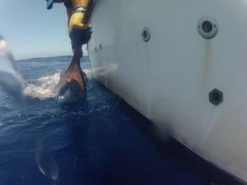 Liberame ? Pesca Deportiva Cavalier & Blue Marlin Gran Canaria