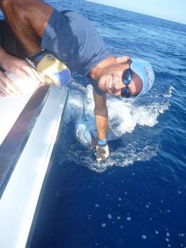 Release Me - Wayne Cooper from Sheffield released a 600 lbs Blue Marlin Cavalier & Blue Marlin Sport Fishing Gran Canaria
