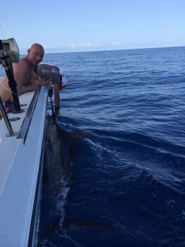 440 lbs Blue Marlin tagged and released on the boat Cavalier Cavalier & Blue Marlin Sport Fishing Gran Canaria