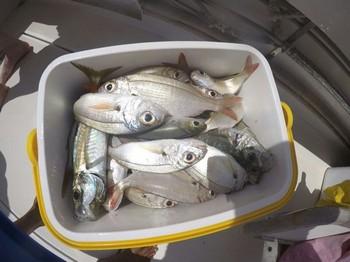 Doradas Pesca Deportiva Cavalier & Blue Marlin Gran Canaria