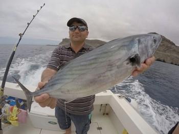Atlantic Bonito, caught by Chris O'Keefe from Ireland Cavalier & Blue Marlin Sport Fishing Gran Canaria