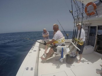 Bluefin Tuna ready to release Cavalier & Blue Marlin Sport Fishing Gran Canaria