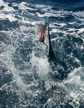 25 kg Spearfish capturado por Cees Pipping en el barco Cavalier Pesca Deportiva Cavalier & Blue Marlin Gran Canaria