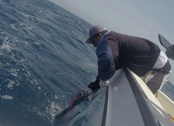 25 kg White Marlin tagged & released by Michael Gödved from Denmark Cavalier & Blue Marlin Sport Fishing Gran Canaria