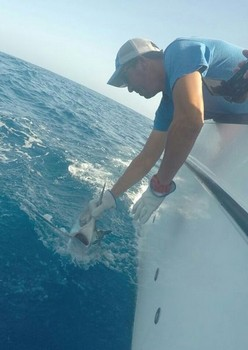 White Marlin released by Ed Racket from Holland Cavalier & Blue Marlin Sport Fishing Gran Canaria