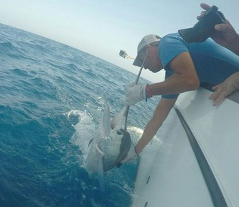 White Marlin - Well done Ed Cavalier & Blue Marlin Sport Fishing Gran Canaria