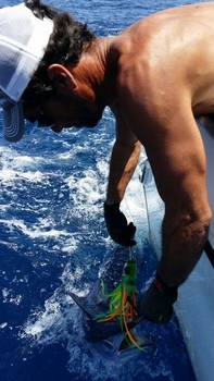 White Marlin - 60 lbs White Marlin released by Jos van Loo from Holland Cavalier & Blue Marlin Sport Fishing Gran Canaria