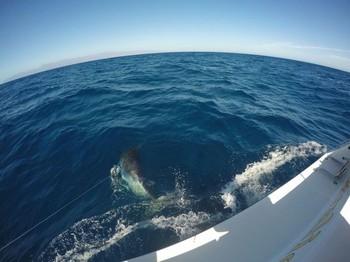 Marlin azul Pesca Deportiva Cavalier & Blue Marlin Gran Canaria