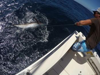 Blue Marlin además del Cavalier Pesca Deportiva Cavalier & Blue Marlin Gran Canaria