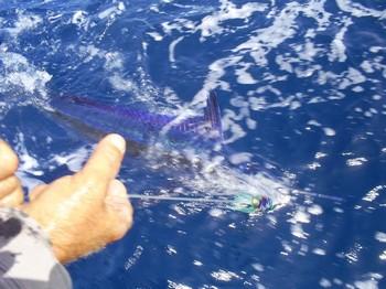 Marlin blanco Pesca Deportiva Cavalier & Blue Marlin Gran Canaria