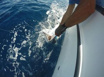 White Marlin lanzado por Gert van Leest desde Holanda Pesca Deportiva Cavalier & Blue Marlin Gran Canaria