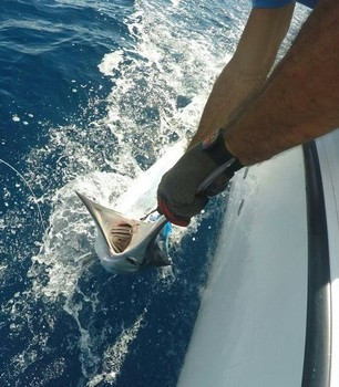 Relese-Me - White Marlin lanzado por Gert van Leest de Holanda Pesca Deportiva Cavalier & Blue Marlin Gran Canaria