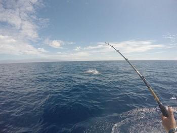 Junping Whte .! Cavalier & Blue Marlin Sport Fishing Gran Canaria