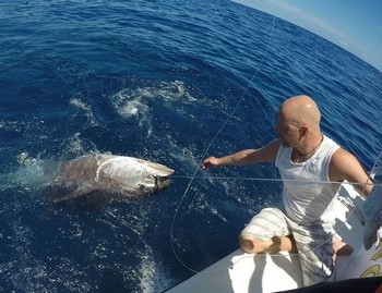 250 kg Bluefin Tuna caught and released by Matthew from Sweden Cavalier & Blue Marlin Sport Fishing Gran Canaria