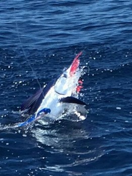 Great shot - Well done Cavalier & Blue Marlin Sport Fishing Gran Canaria
