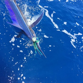 Spearfish - 80 lb Spearfish,  caught and released by Kaarlo Salkunen from Finland Cavalier & Blue Marlin Sport Fishing Gran Canaria