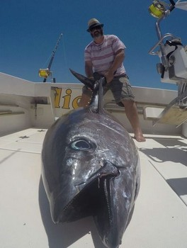 Big Eye Tuna - 100 kg Big Eye Tuna caught by Jon Gregory Cavalier & Blue Marlin Sport Fishing Gran Canaria