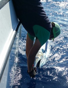 Blue Marlin caught and released  by Barry Townsend Cavalier & Blue Marlin Sport Fishing Gran Canaria