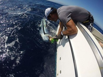 Blue Marlin caught and released by Adrian Smith Cavalier & Blue Marlin Sport Fishing Gran Canaria