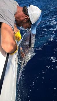 270 kg Blue Marlin Cavalier & Blue Marlin Sport Fishing Gran Canaria