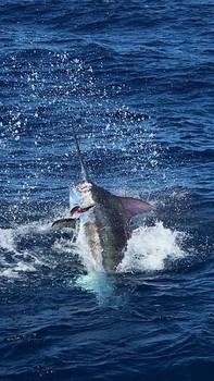 Blue Marlin - David Hadden hooked up with his 600 lbs Blue Marlin Cavalier & Blue Marlin Sport Fishing Gran Canaria