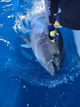 280 kg Bluefin Cavalier & Blue Marlin Sport Fishing Gran Canaria