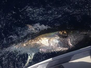 Bluefin Tuna Cavalier & Blue Marlin Sport Fishing Gran Canaria