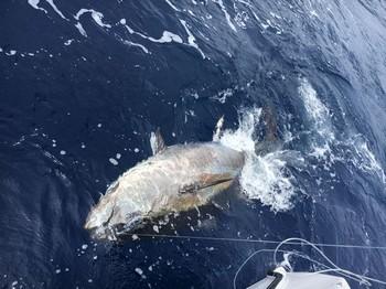 Bluefin Tuna - 250 kg Bluefin Tuna Cavalier & Blue Marlin Sport Fishing Gran Canaria