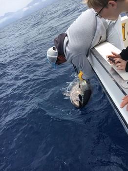 Congratulations  250 kg Bluefin Tuna Cavalier & Blue Marlin Sport Fishing Gran Canaria