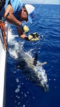 Atún rojo liberado por Pascal Wetsels de Holanda Pesca Deportiva Cavalier & Blue Marlin Gran Canaria