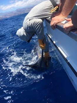 ¡Liberame! Pesca Deportiva Cavalier & Blue Marlin Gran Canaria